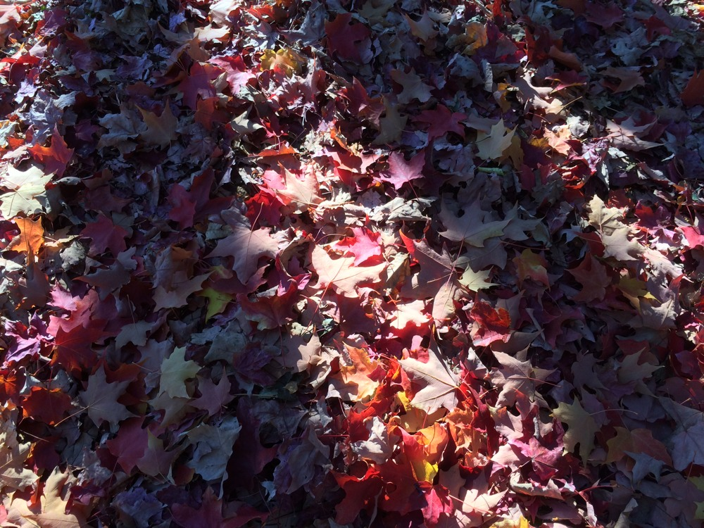 2013-10-25-Fall-Leaves